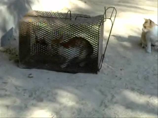 الصفوة صيد قطط
