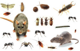 شركة مكافحة حشرات فى حريملاء